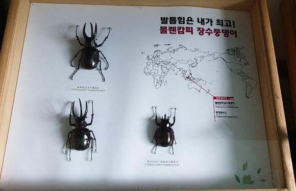 '벌레'에 불과하던 곤충, '블루칩' 부상