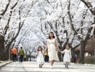 올봄, 마지막 벚꽃 보러 가볼까!