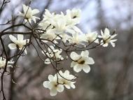 【시】 그대가 봄을 춤추게 하라
