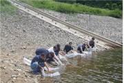 민물고기 최고급 어종 어린 쏘가리 방류