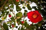 【시】  봄의 왈츠